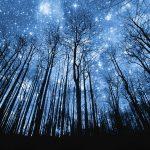 Tree Silhouette Against Starry Night Sky