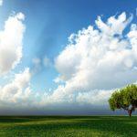 Sky-With-Tree-Hd-Image