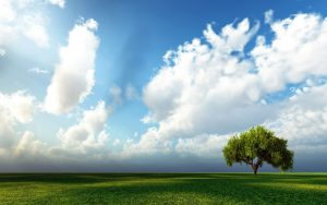 Sky-With-Tree-Hd-Image