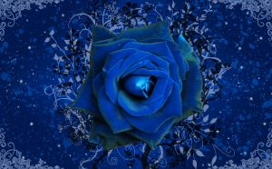 23-02-17-blue-roses-wallpapers4258