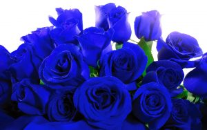 23-02-17-blue-roses-wallpapers4267