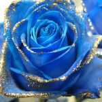 23-02-17-blue-roses-wallpapers4269