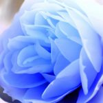 23-02-17-blue-roses-wallpapers4275