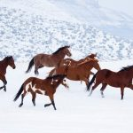 24-02-17-brown-horse-running-wallpapers28