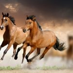 24-02-17-brown-horse-running-wallpapers30
