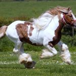 24-02-17-brown-horse-running-wallpapers31
