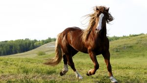 24-02-17-brown-horse-running-wallpapers33