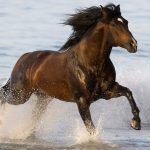 24-02-17-brown-horse-running-wallpapers36