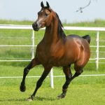 24-02-17-brown-horse-running-wallpapers39