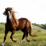 24-02-17-brown-horse-running-wallpapers40