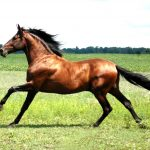 24-02-17-brown-horse-running-wallpapers41