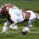 24-02-17-brown-horse-running-wallpapers42
