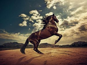 24-02-17-brown-horse-running-wallpapers44