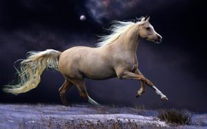 24-02-17-brown-horse-running-wallpapers45