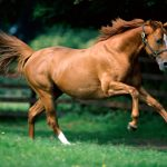24-02-17-brown-horse-running-wallpapers46