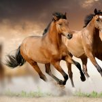 24-02-17-brown-horse-running-wallpapers47