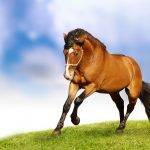 24-02-17-brown-horse-running-wallpapers57