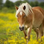 24-02-17-horse-wallpapers548