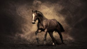 24-02-17-horse-wallpapers555
