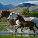 24-02-17-horse-wallpapers559