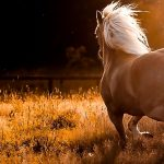 24-02-17-horse-wallpapers562