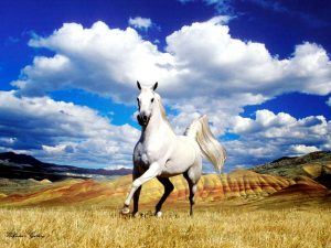 24-02-17-horse-wallpapers565