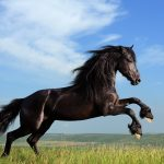 24-02-17-horse-wallpapers566