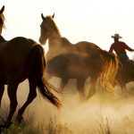 24-02-17-horse-wallpapers568
