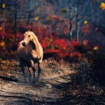 24-02-17-horse-wallpapers570