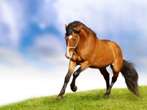 24-02-17-horse-wallpapers577