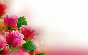 24-02-17-rose-wallpapers828