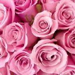 24-02-17-rose-wallpapers840