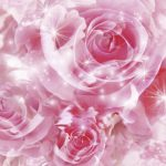 24-02-17-rose-wallpapers847