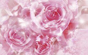24-02-17-rose-wallpapers847