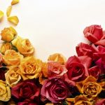 24-02-17-roses-wallpapers74