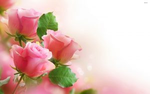 24-02-17-roses-wallpapers87