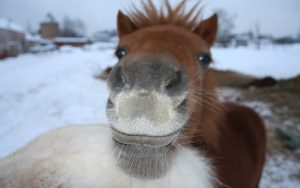 26-02-17-cute-brown-horse-wallpaper9860
