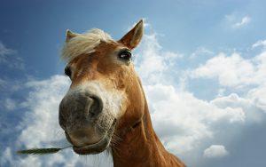 26-02-17-funny-horse-closeup12043