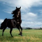26-02-17-horses-wallpapers2779