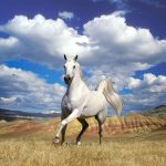 26-02-17-horses-wallpapers2786