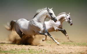 26-02-17-horses-wallpapers2789