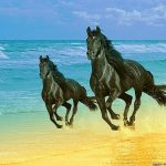 26-02-17-horses-wallpapers2791