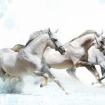 26-02-17-horses-wallpapers2792