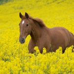 26-02-17-horses-wallpapers2795