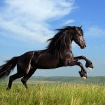 26-02-17-horses-wallpapers2796