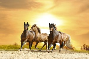 26-02-17-horses-wallpapers2799