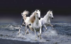 26-02-17-horses-wallpapers2800