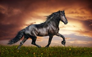 26-02-17-horses-wallpapers2801