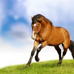 26-02-17-horses-wallpapers2802