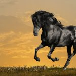 26-02-17-horses-wallpapers2803